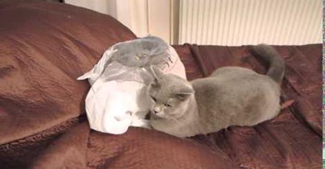 Gato levando susto com saco plástico