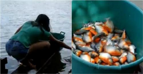 Mulher pescando piranha de um jeito diferente